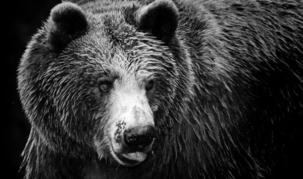 Bear market indicators